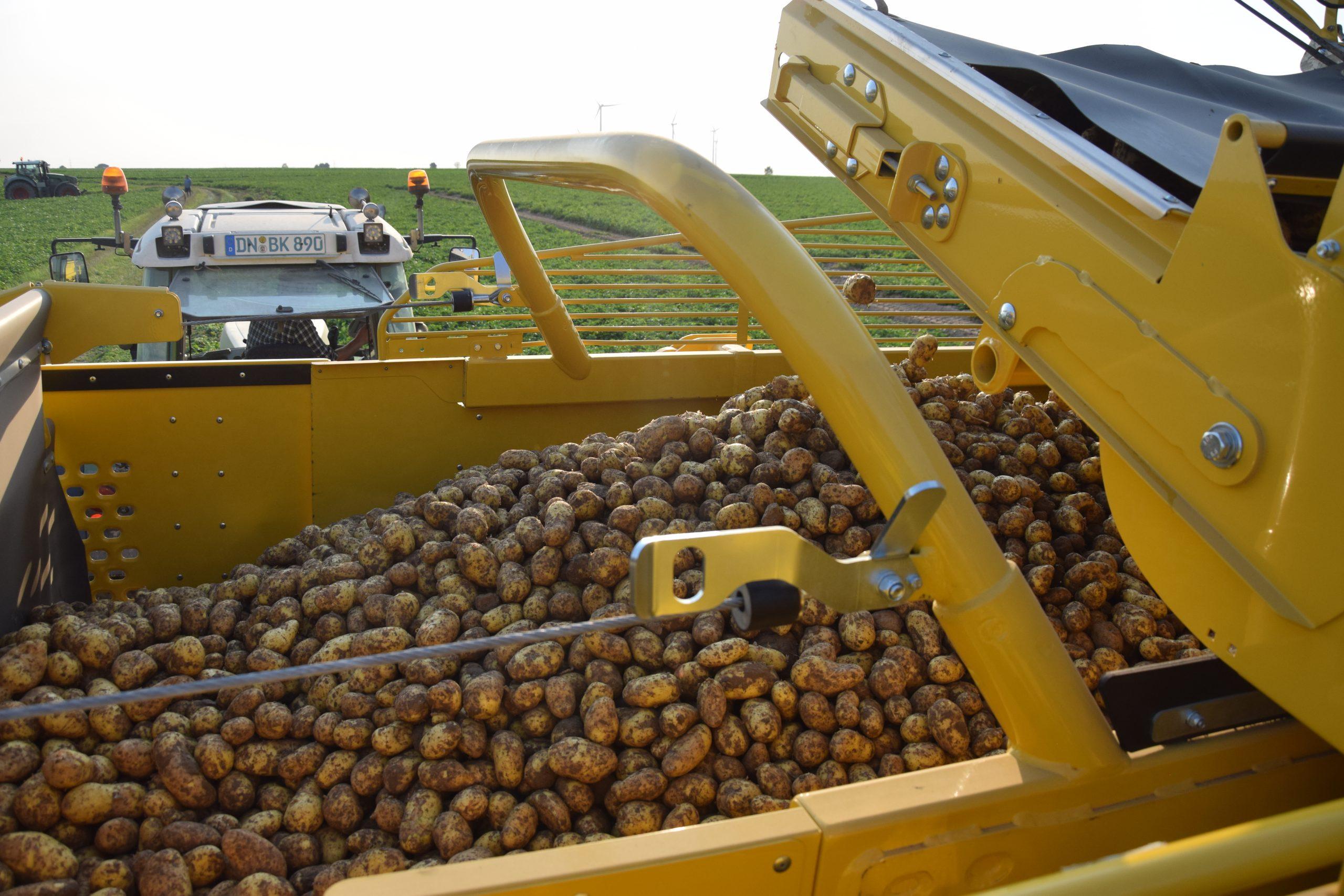 Kartoffelbunker erste Ernte 2021